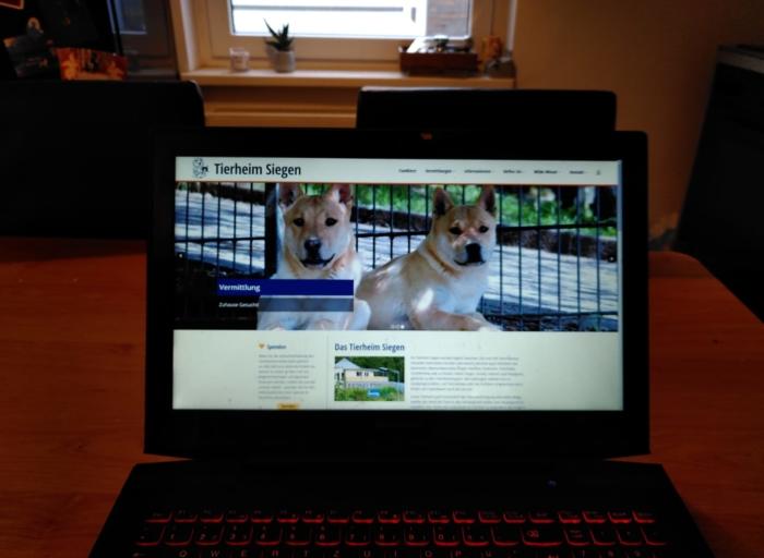 Internetseite des Tierheim Siegen Vermittlung Hunde